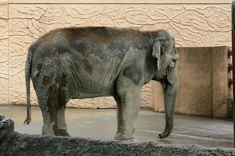 日立市 かみね動物園 アジアゾウ ミネコ