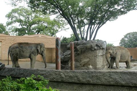 日立市 かみね動物園 アジアゾウ ミネコ スズコ
