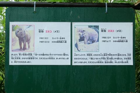 日立市 かみね動物園 ミネコ スズコ