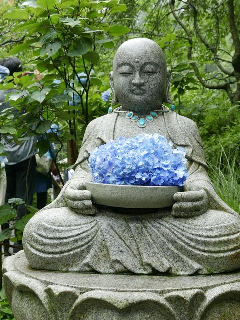 花想い地蔵 紫陽花 鎌倉 明月院