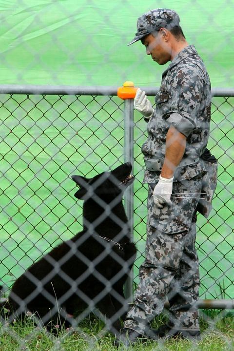 警備犬展示 霞ヶ浦駐屯地 開設66周年・関東補給処創立21周年記念行事