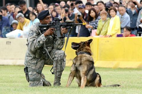 K9 軍用警察犬 デモンストレーション 横田基地日米友好祭