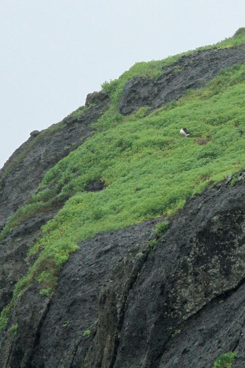 ケータ島エコツアー コアホウドリ