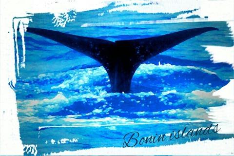マッコウクジラ エコツアー父島周辺1日コース