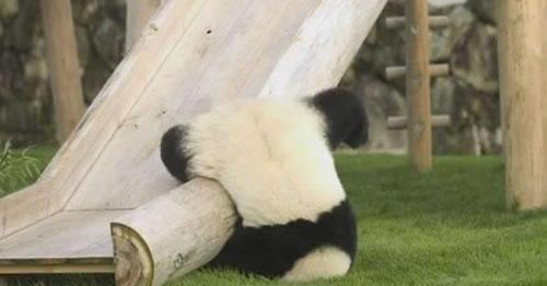 Funny-Mill-Funny-Panda-Collection-pic-1