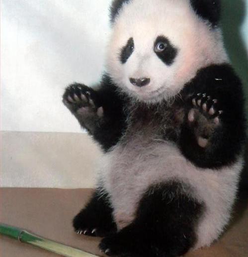 hilarious-jokes-funny-panda