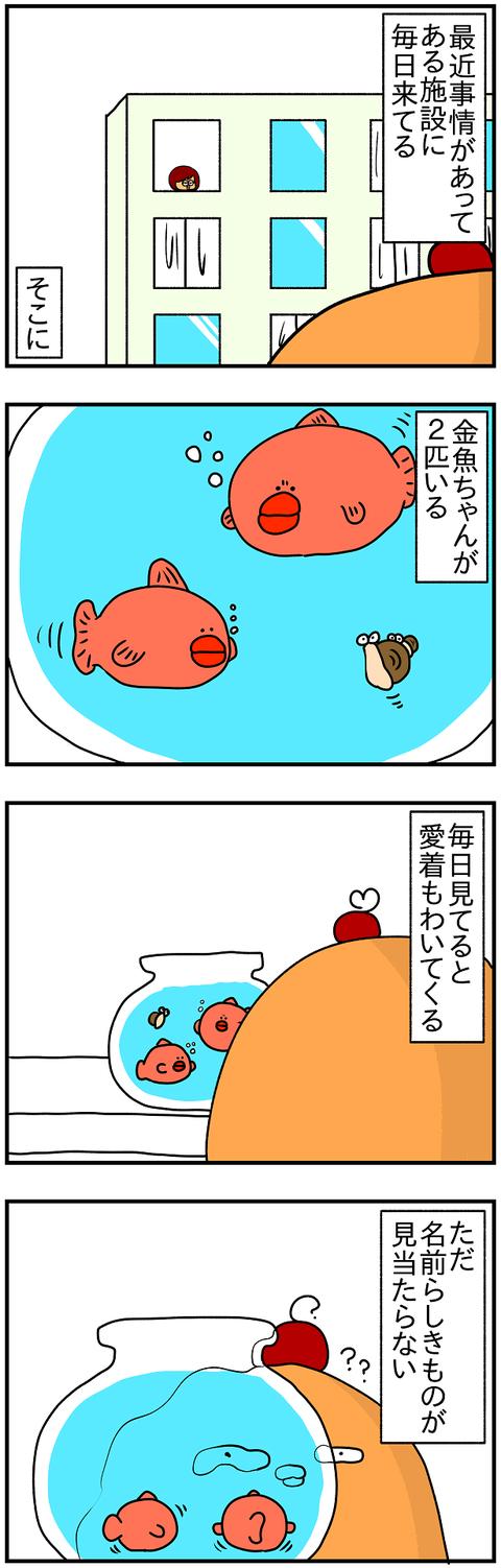 947.金魚1