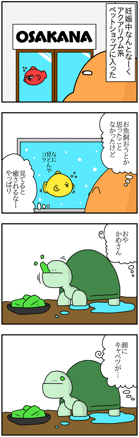 953.かめ1