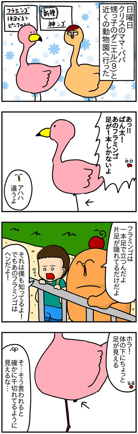フラミンゴ1