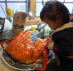 100206_crab1