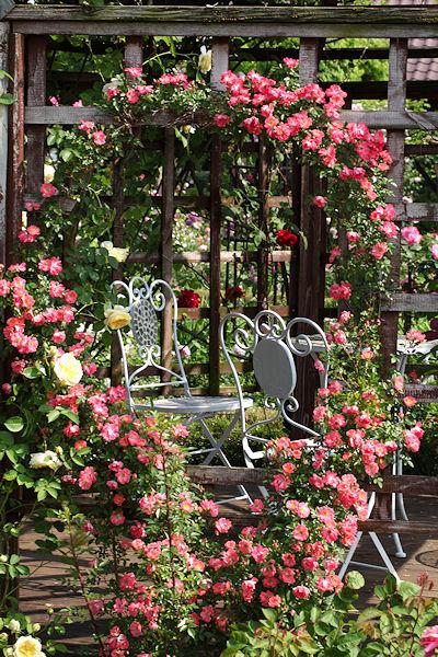 fujisawa-rose-garden13