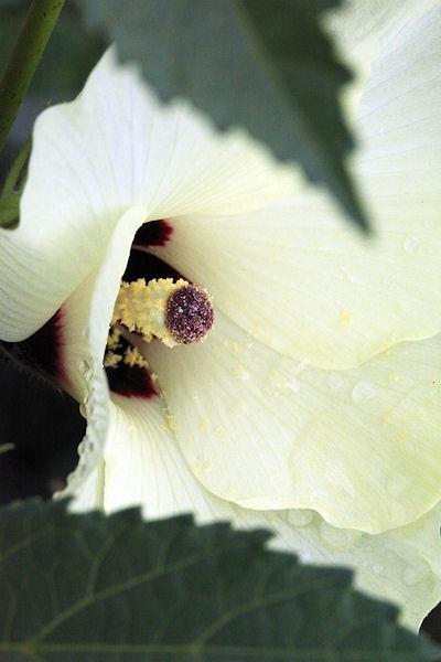 lotus-flower12.jpg