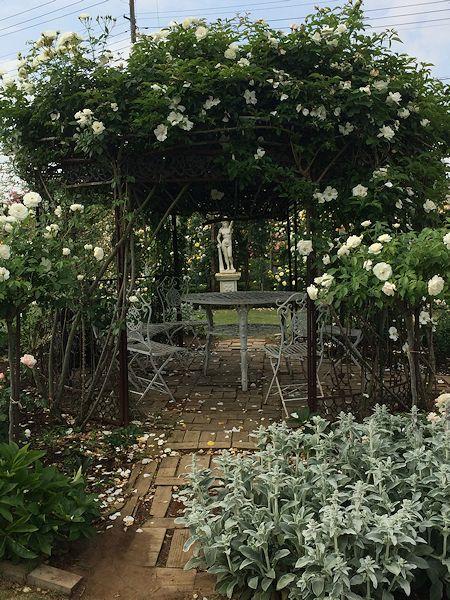2015fujisawa-rose-garden12.jpg