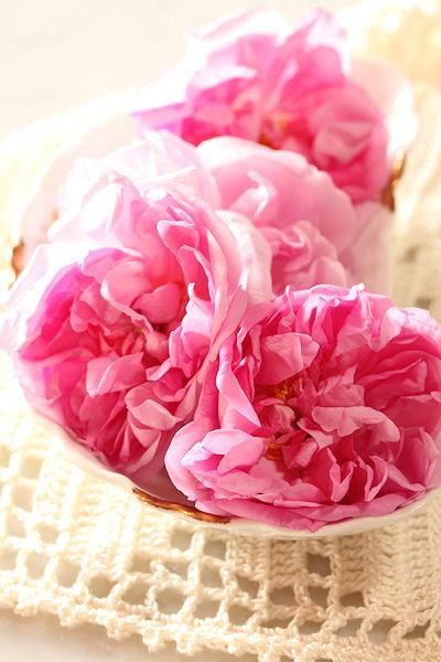 damask-roses2