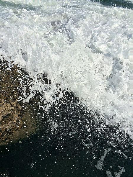 hydrangea6.jpg