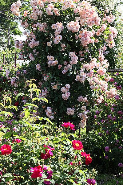rhubarb-tart17.jpg