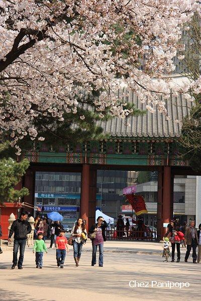 spring-seoul11