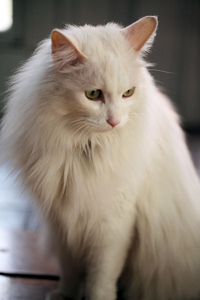 fraise-mont-blanc5