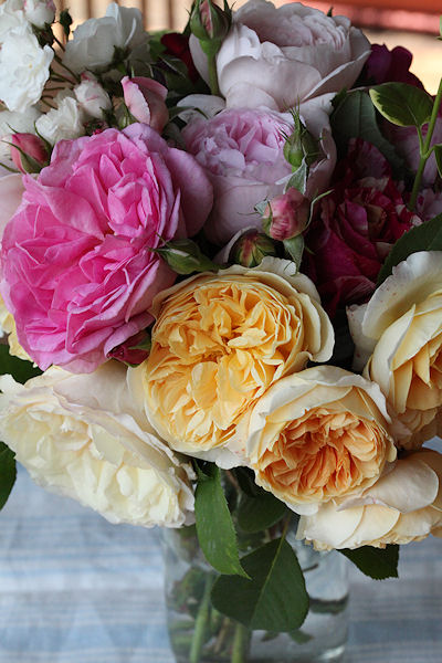 rose-puff5.jpg