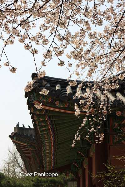 spring-seoul15