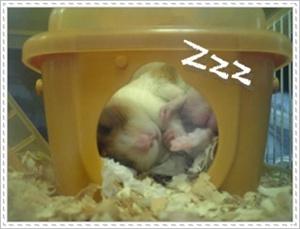 おやすみ金ちゃん