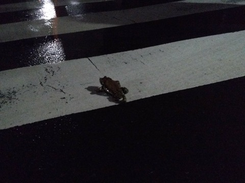 frog2080308