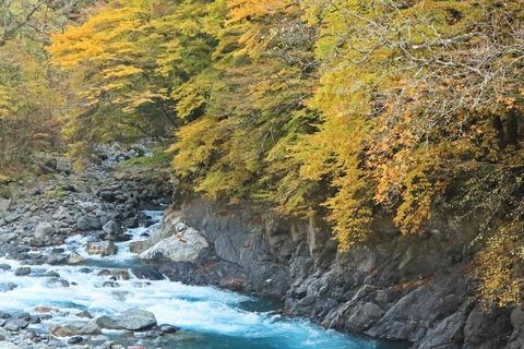 遠山森林鉄道4