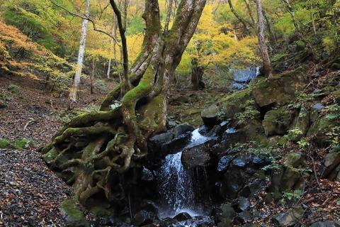 遠山森林鉄道7