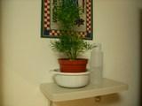 観葉植物!!