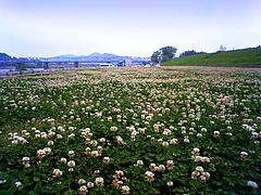 仁淀川01