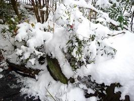 せんだい雪、3