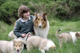 ラッシーと子犬最後