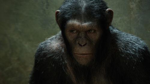 猿の惑星、4