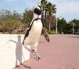 可愛くないペンギン