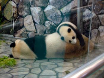 パンダ可愛い