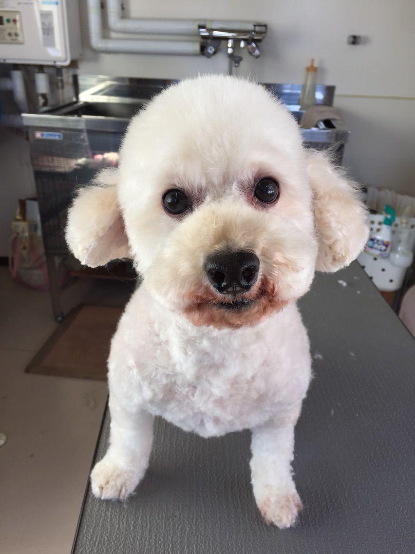 犬 キムタク
