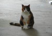 三毛猫04