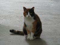 三毛猫03