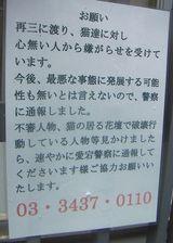 桜田ネコ4