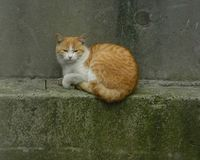 川口猫01