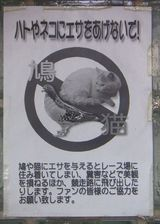 エサやり禁止03
