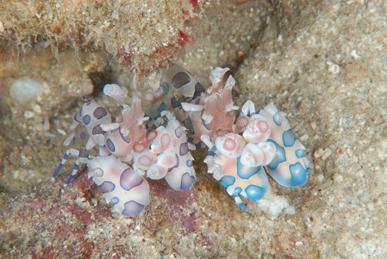 The Crustacea of Philippine Sea                TATSU
