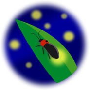 firefly01