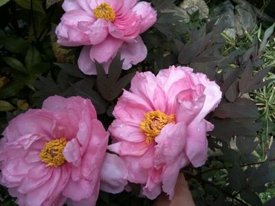 春の花たち & 今週のデジュネ