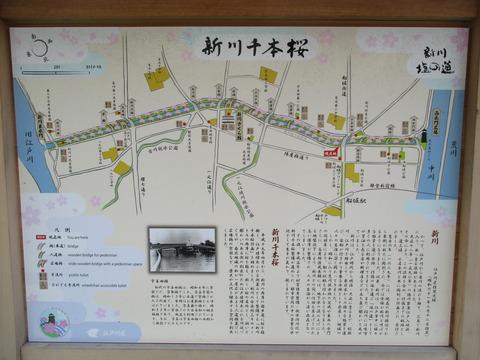 29新川千本桜2