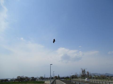 135石ノ上橋4