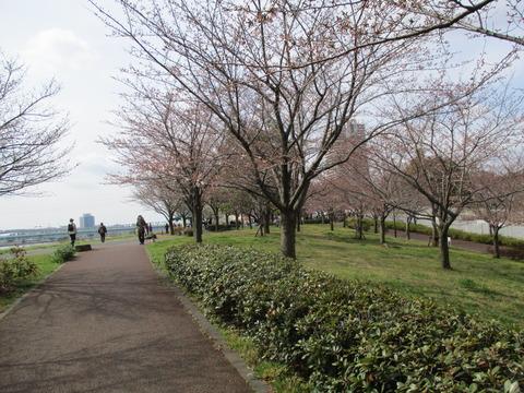 09小松川千本桜4