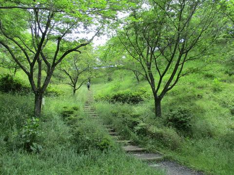 17桜見本園3