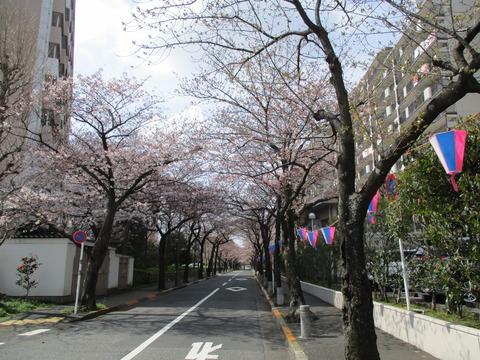 17船堀公園前の道1