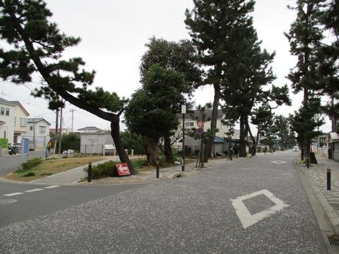 56参道松並木3